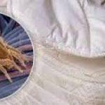 1.5 milioane de acarieni de praf traiesc in patul tau. Distruge-i folosind un singur lucru!